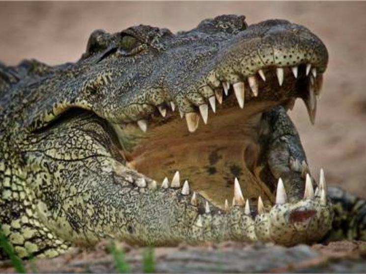 croc_(c)_Chris_Martin