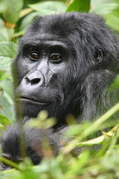 uganda-verticais-05