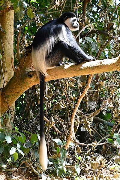 uganda-verticais02